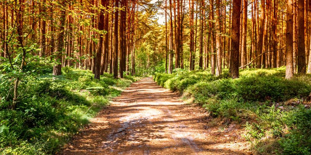 Leśna ścieżka - Dom Seniora w Bornem Sulinowie i okolice