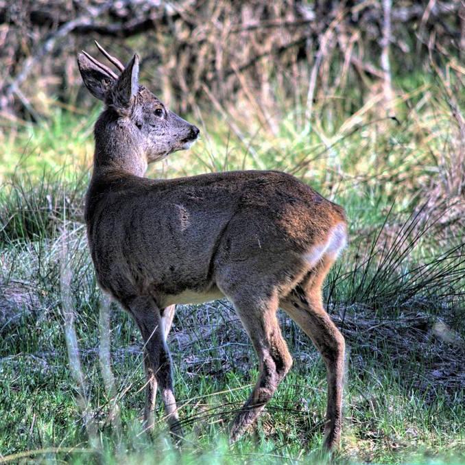 Dzikie zwierzęta - Dom Seniora w Bornem Sulinowie i okolice
